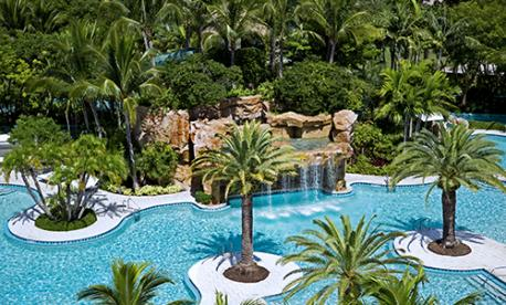 Palm Tree Pool