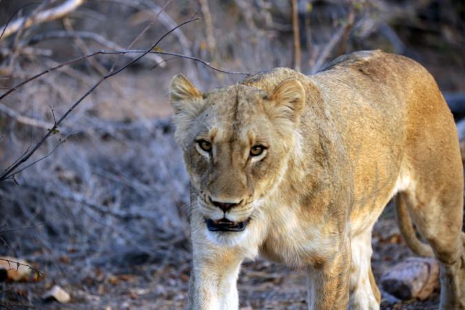 Kosher Tours - Kosher Vacations - African Safari