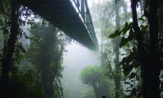 The Santa Elena Skywalk through the Costa Rican rainforest